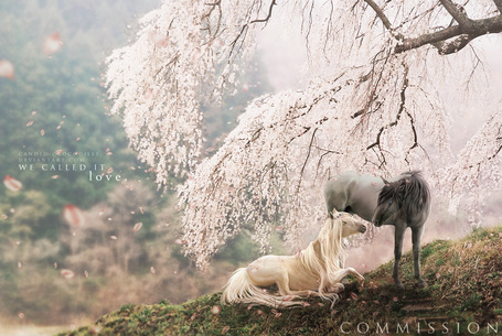 Фото На краю горы под цветущей сакурой две влюбленные лошади смотрят друг на друга, We called in love, by Candid Crocodiles