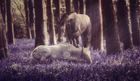 Фото Две лошади на цветочной поляне, by TheCallyBear