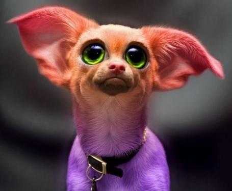 Фото Разноцветная собака с большими, зелеными глазами