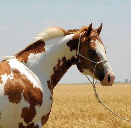 Фото Пятнистая лошадь на фоне природы