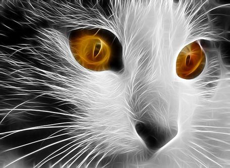 Фото Фрактальная кошка с янтарными глазами