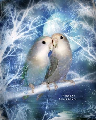 Фото Попугаи сидящие на веточке дерева, на фоне луны (Зимняя любовь / Winter love), автор Carol Cavalaris