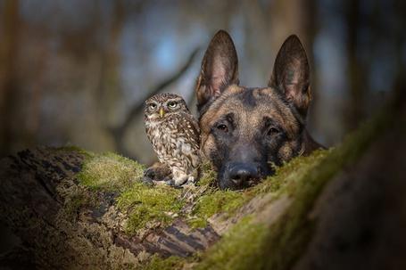 Фото Собака исова, которые немогут жить друг без друга, фото Тани Бранд