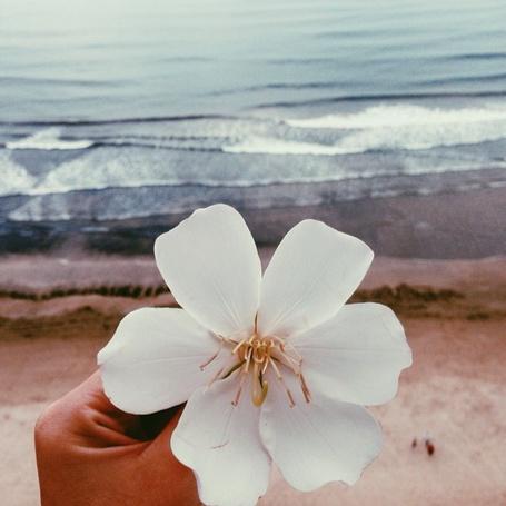 Фото В руке весенний цветок
