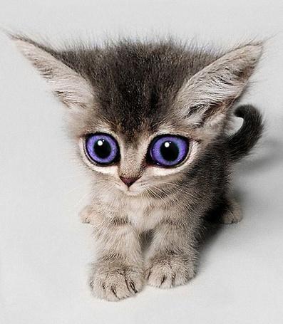 Фото Серый котенок с большими фиолетовыми глазами