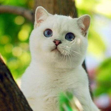 Фото Белый котенок с голубыми глазами сидит на дереве