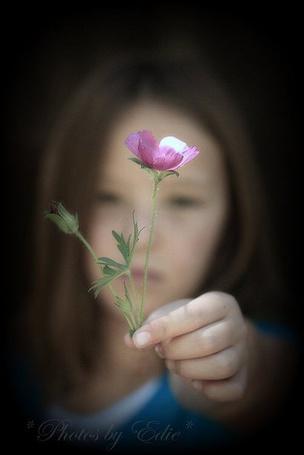 Фото Девочка держит в руке, перед собой розовый цветок, на размытом фоне, Photos Edie