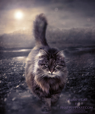 Кот идет по дороге