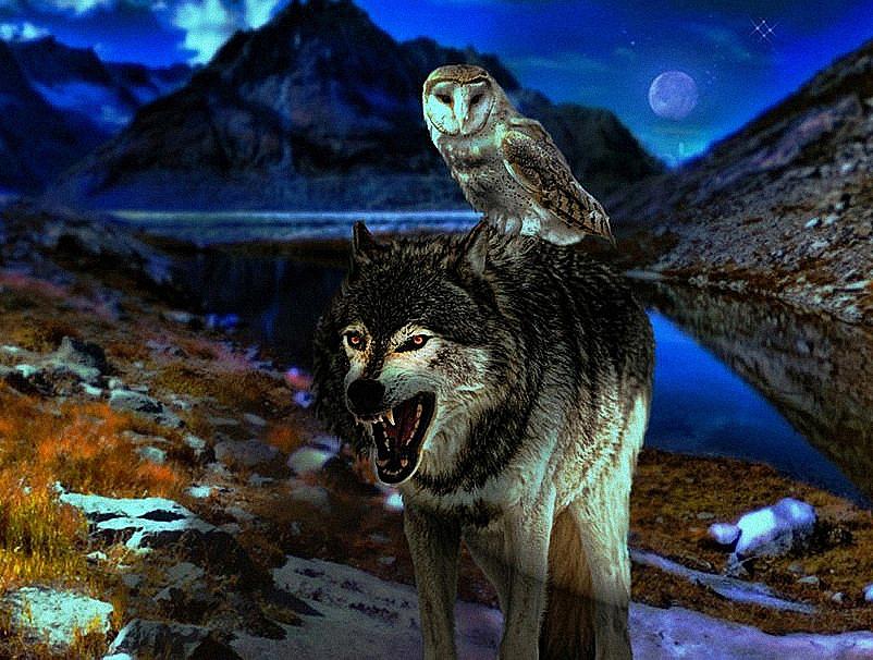 картинки волков и зайцев нет особи одних случаях