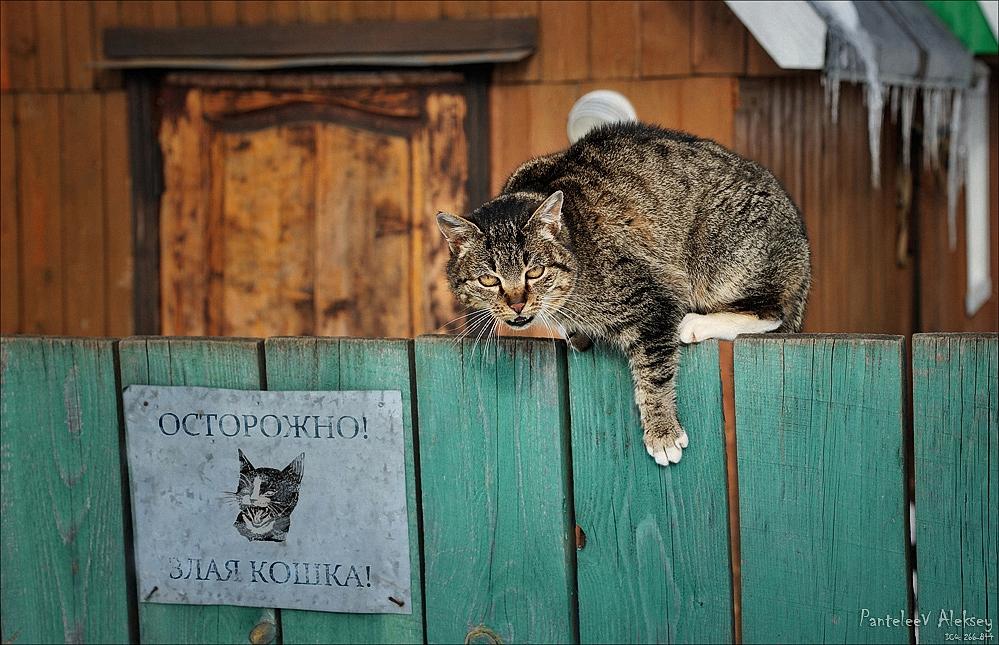 Картинки злых кошек с надписями смешные, прости меня