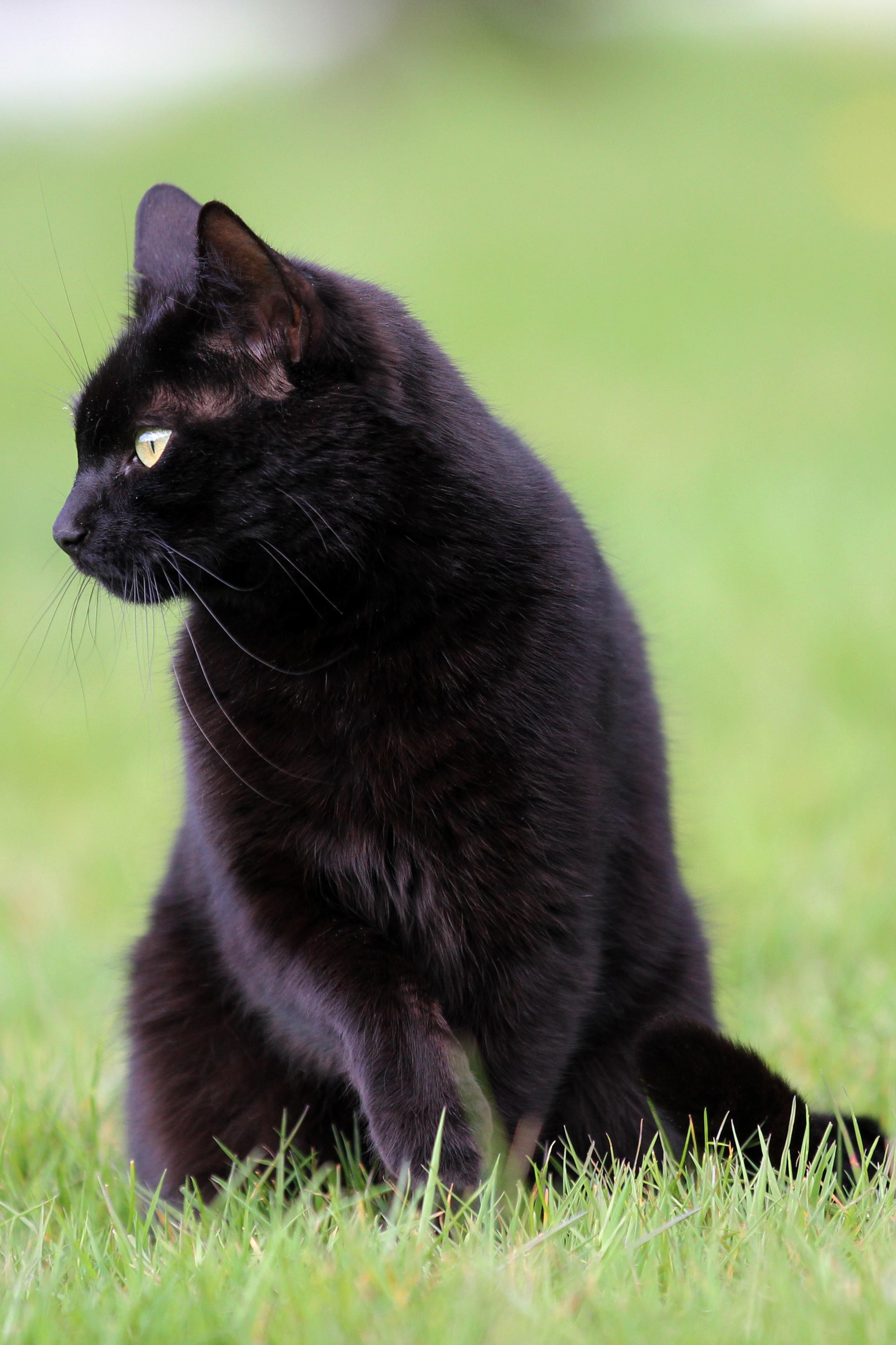 картинка чорного кота который сегодня можно