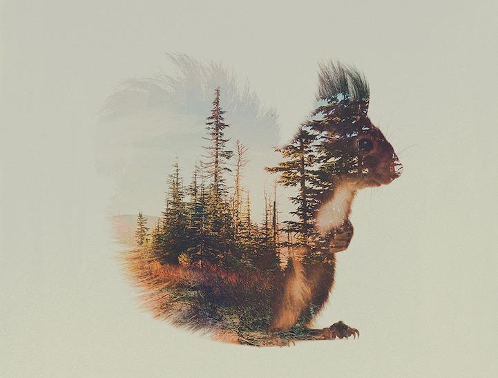 Фото В белке отражается лес, by Andreas Lie
