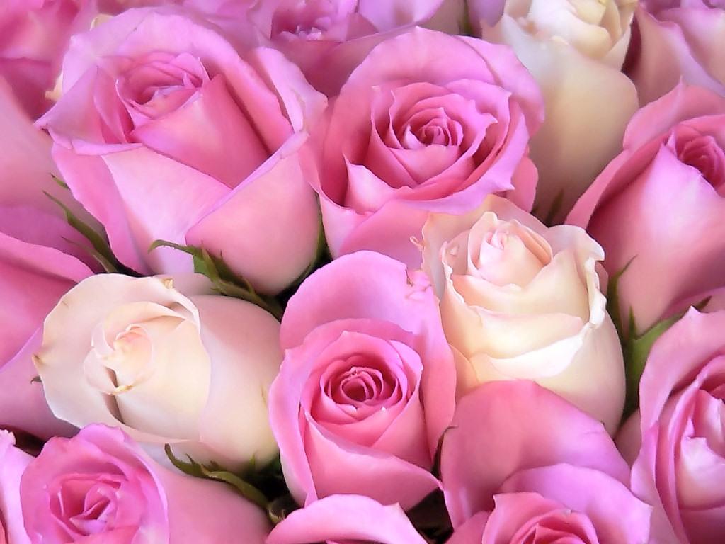 Фото Не раскрывшиеся бутоны розовых роз