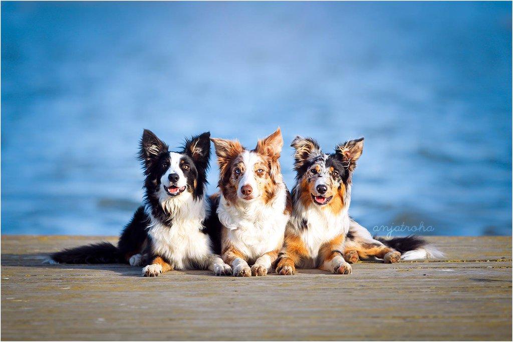 три собаки фото несмотря