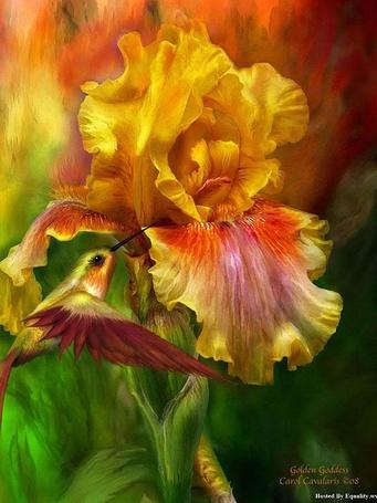 Фото Птичка колибри собирает нектар с желтого цветка, художница Кэрол Каваларис / Carol Cavalaris /
