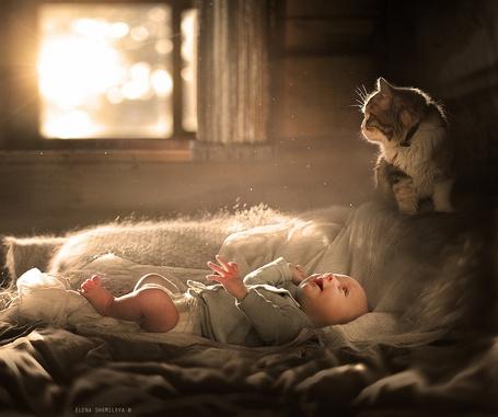 Фото Маленький мальчик лежит на диване и смотрит вверх на кошку сидящую у него в изголовье, Elena Shumilova
