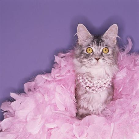 Фото Кошка сидит в розовых перьях, с бусами на шее
