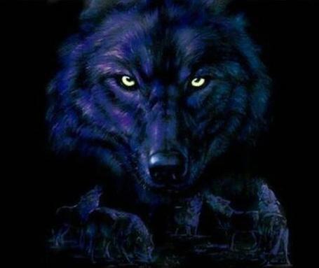 Фото Голова черного волка вожака с желтыми глазами в темноте, внизу его волчья стая из нескольких волков