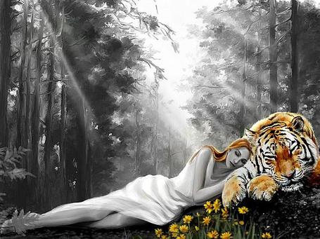 Фото Девушка спит рядом с тигром на лесной поляне