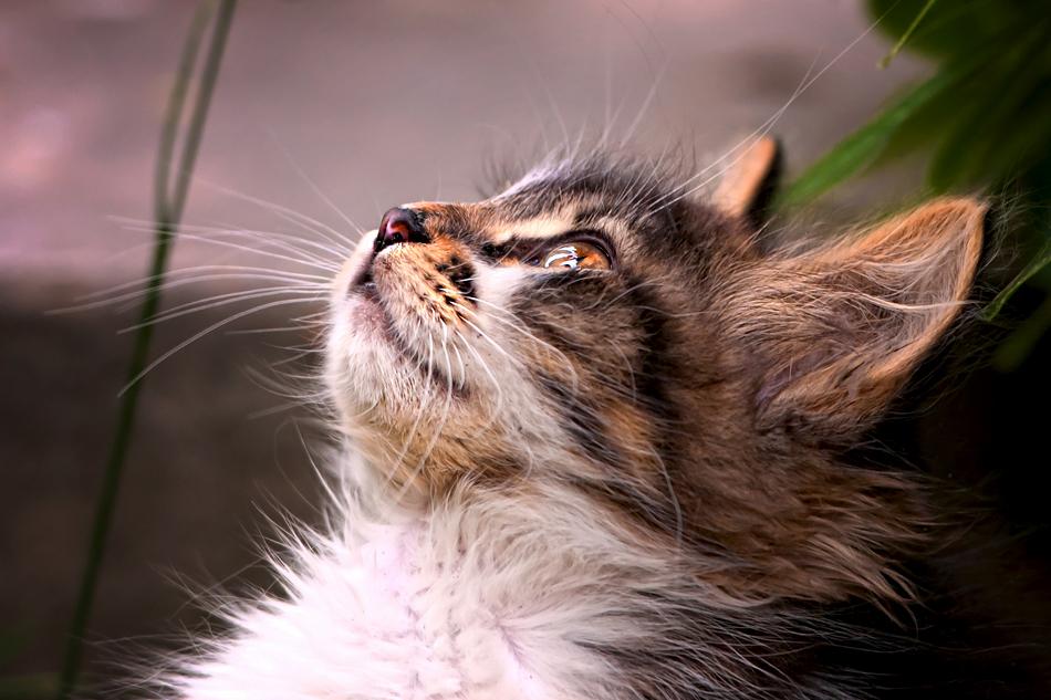 выглядит картинки котят которые смотрят вверх будут фотки