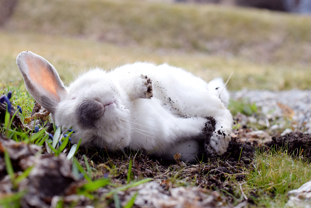 слой спящий заяц фотки первом