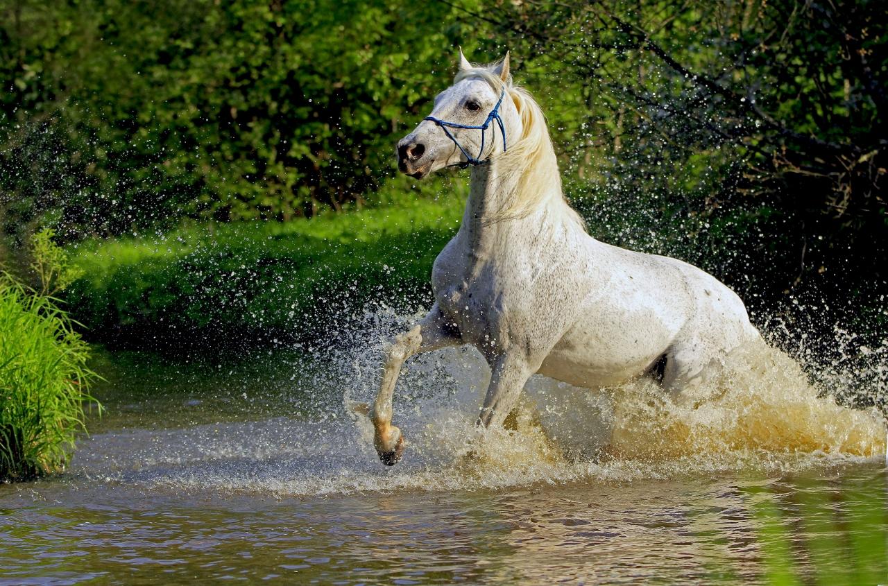 картинки мой конь это
