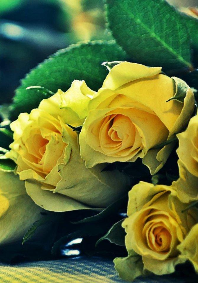 Фото Бутоны желтых роз с зелеными листьями лежат на столе