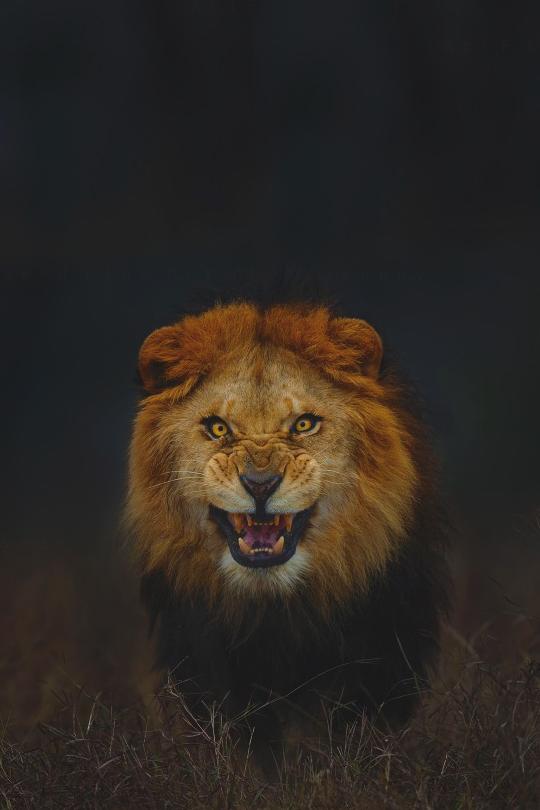 Rencontre femme taureau homme lion