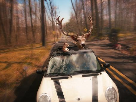 Фото Олень и белка довольные едут по дороге на автомобиле, by Rowye