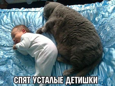 Фото Грудной ребенок и взрослый кот спят на кровати (Спят усталые детишки)