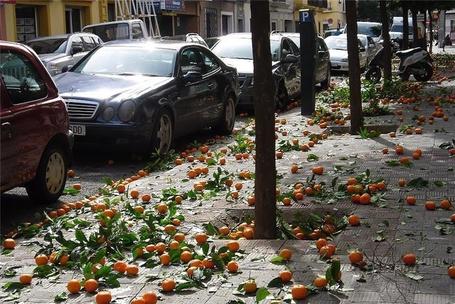 Фото Апельсины созрели. Севилья, Испания