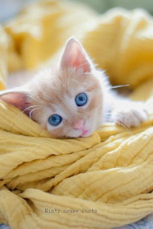 Фото Бело-рыжий котенок с голубыми глазами