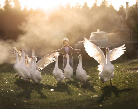 Фото Мальчик и гуси, фотограф Elena Shumilova