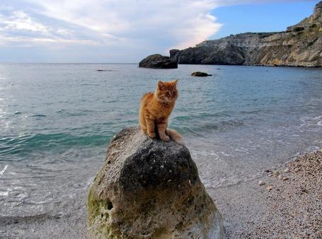 Фото Рыжий кот сидит на камне, который стоит на берегу моря и на камень набегает морская волна. Справа вдоль берега видны скалы