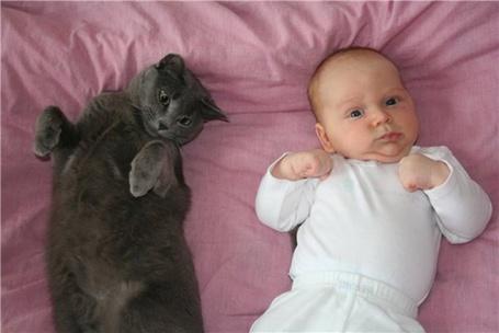 Фото Малыш и кошка отдыхают вместе