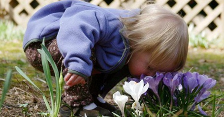 Фото Малыш наслаждается первым весенним запахом цветов