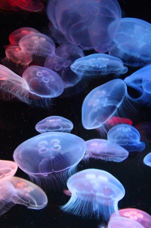 Фото Медузы под водой