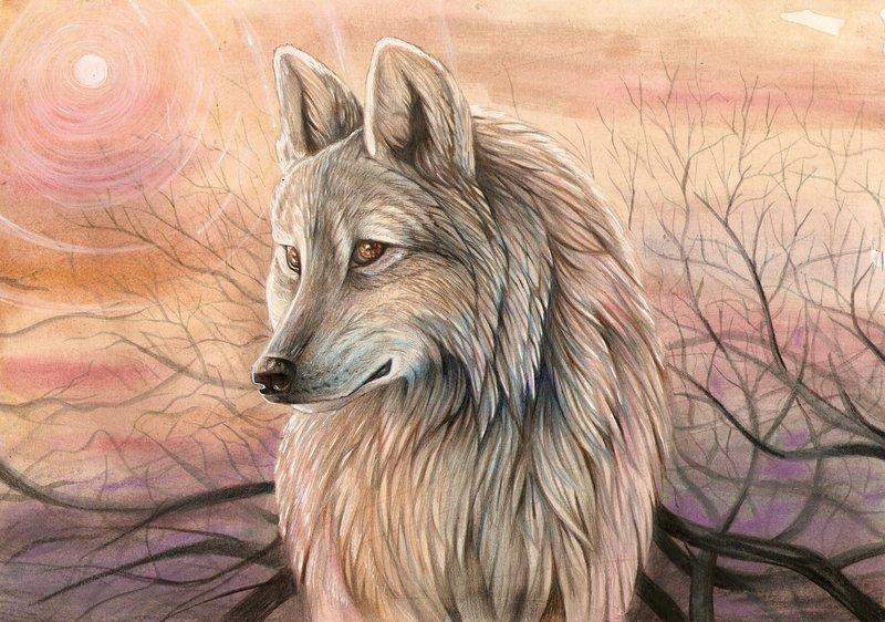 Грустный волк картинка