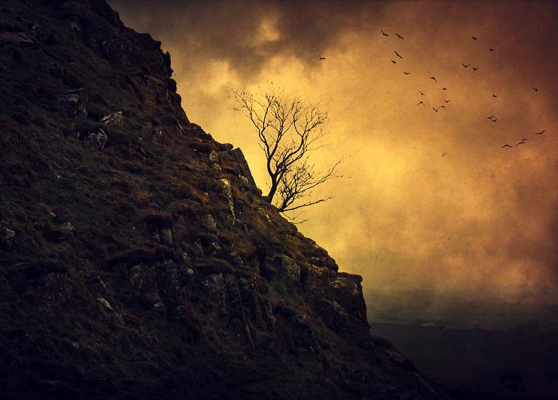 Фото дерево без листьев на обрыве by
