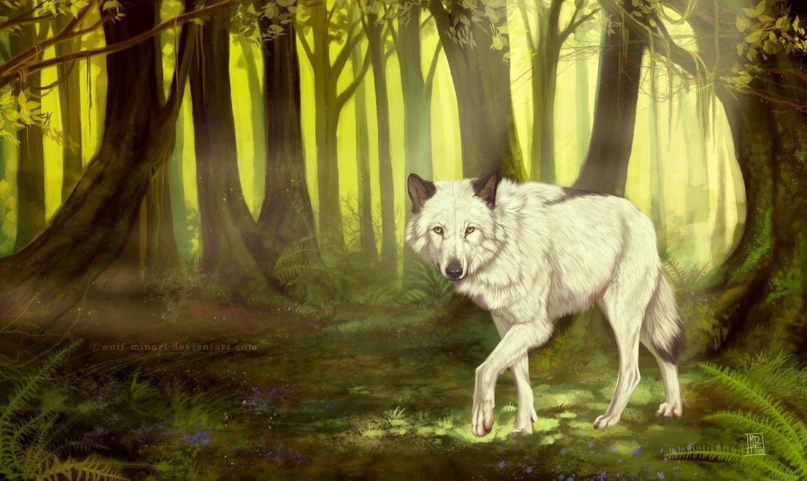 Фото Белый волк в зачарованном лесу, by Wolf Minori