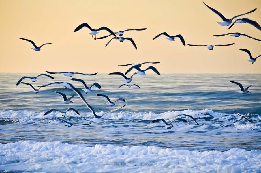 Картинки море волны чайки, картинки