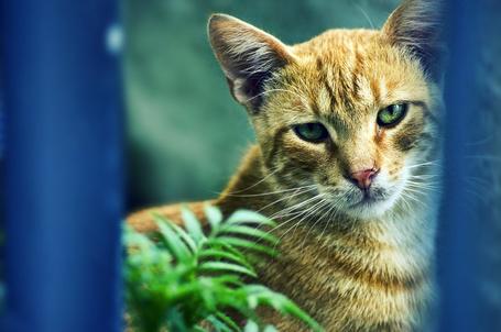 Фото Рыжий грустный кот, by mebilia