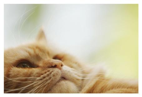Фото Кошка смотрит вверх