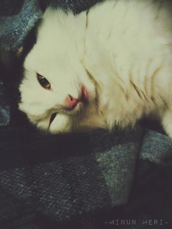 Фото Кошка лежит на клетчатом пледе