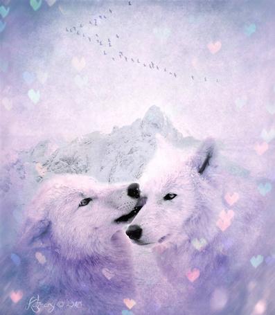 Фото Пара белых волков, работа katmary