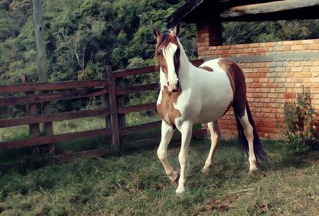 Фото Красивая пятнистая лошадь, by LyraWhite