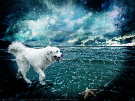 Фото Собака на берегу моря, by Sea-To-Sky