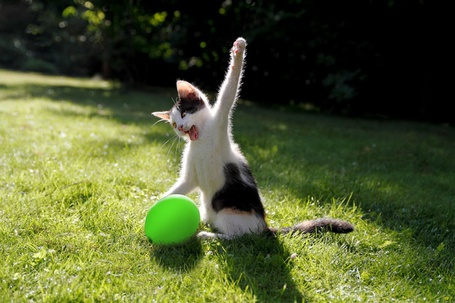 Фото Кот замахнулся на шарик
