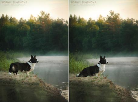 Фото Серия фото про пса на берегу реки