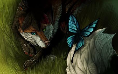 Фото Лиса с разноцветными глазами лежащая в траве смотрит на бабочку пролетающую над ней, by Shwonky